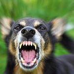Dog Bite Injury Lawyer Lowell Massachusetts
